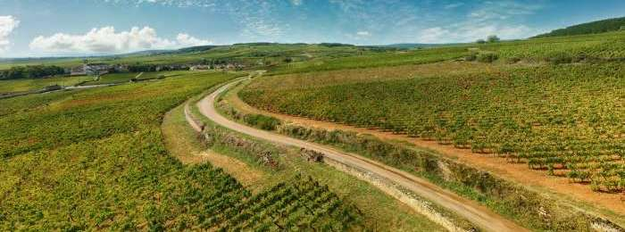 phpfzg1zl-vineyards-of-burgundy-france-picture-id1016226716-bourgogne-768x260